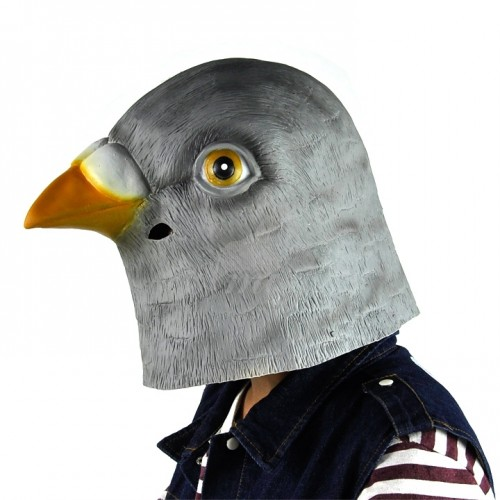 pigeon's intellegence