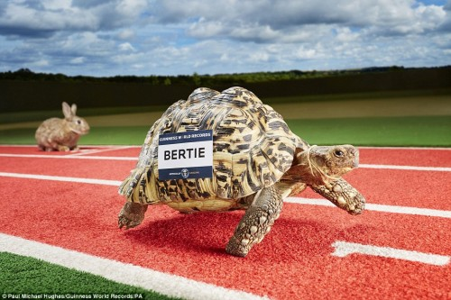 2C1CD47B00000578-3228566-Bertie_sped_into_history_in_Durham_beating_a_37_year_old_record_-a-82_1441841327665